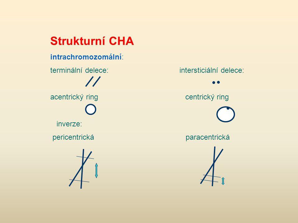 Strukturní CHA intrachromozomální: