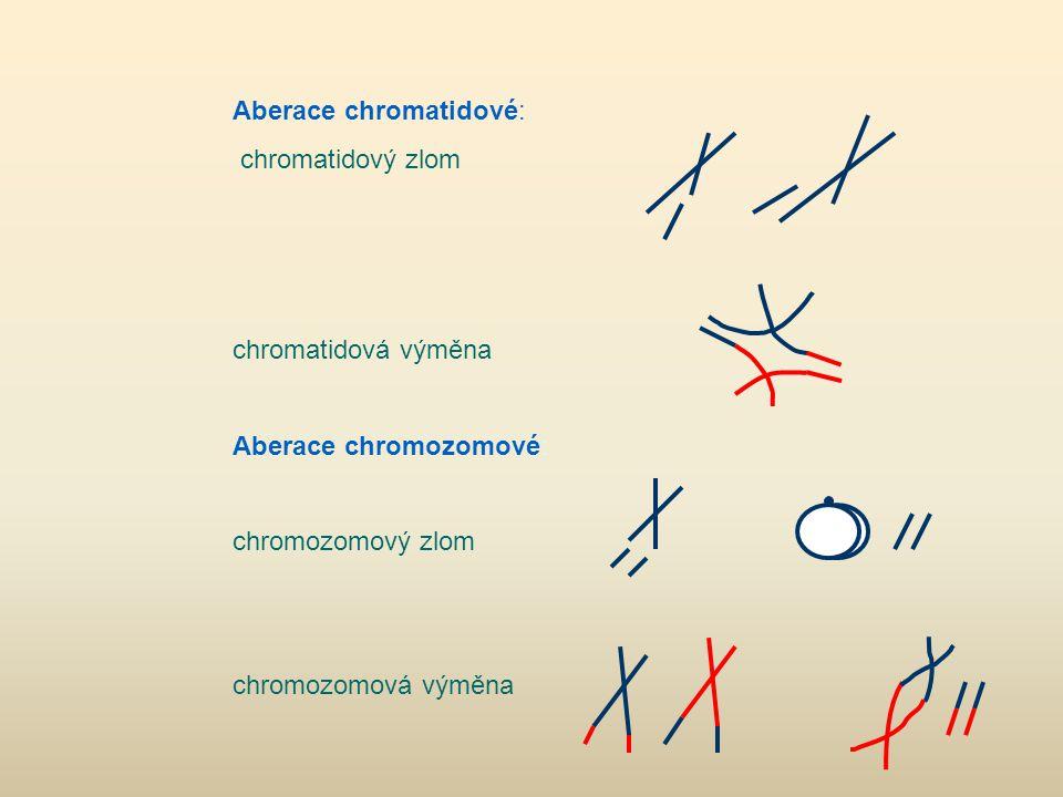 Aberace chromatidové: