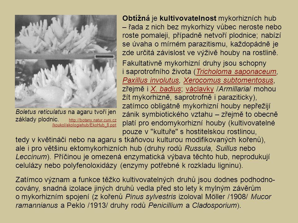 Obtížná je kultivovatelnost mykorhizních hub – řada z nich bez mykorhizy vůbec neroste nebo roste pomaleji, případně netvoří plodnice; nabízí se úvaha o mírném parazitismu, každopádně je zde určitá závislost ve výživě houby na rostlině.