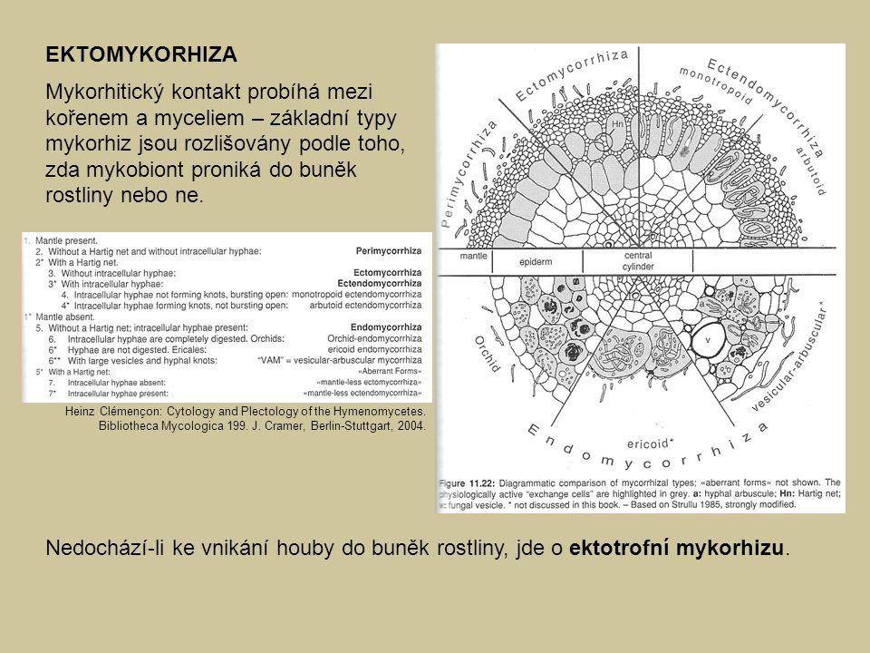 EKTOMYKORHIZA