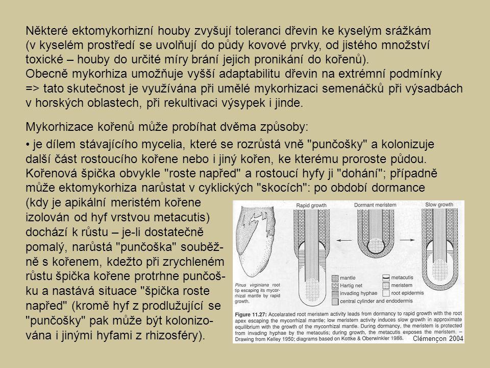 Mykorhizace kořenů může probíhat dvěma způsoby: