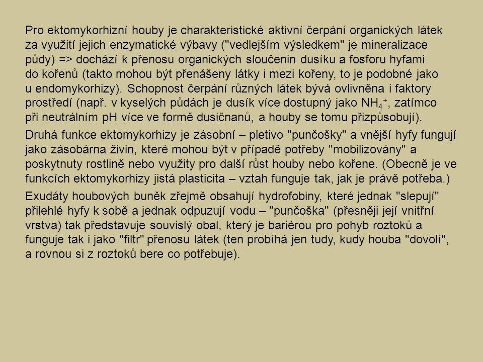 Pro ektomykorhizní houby je charakteristické aktivní čerpání organických látek za využití jejich enzymatické výbavy ( vedlejším výsledkem je mineralizace půdy) => dochází k přenosu organických sloučenin dusíku a fosforu hyfami do kořenů (takto mohou být přenášeny látky i mezi kořeny, to je podobné jako u endomykorhizy). Schopnost čerpání různých látek bývá ovlivněna i faktory prostředí (např. v kyselých půdách je dusík více dostupný jako NH4+, zatímco při neutrálním pH více ve formě dusičnanů, a houby se tomu přizpůsobují).