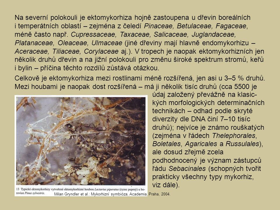 Na severní polokouli je ektomykorhiza hojně zastoupena u dřevin boreálních i temperátních oblastí – zejména z čeledí Pinaceae, Betulaceae, Fagaceae, méně často např. Cupressaceae, Taxaceae, Salicaceae, Juglandaceae, Platanaceae, Oleaceae, Ulmaceae (jiné dřeviny mají hlavně endomykorhizu – Aceraceae, Tiliaceae, Corylaceae aj.). V tropech je naopak ektomykorhizních jen několik druhů dřevin a na jižní polokouli pro změnu široké spektrum stromů, keřů i bylin – příčina těchto rozdílů zůstává otázkou.