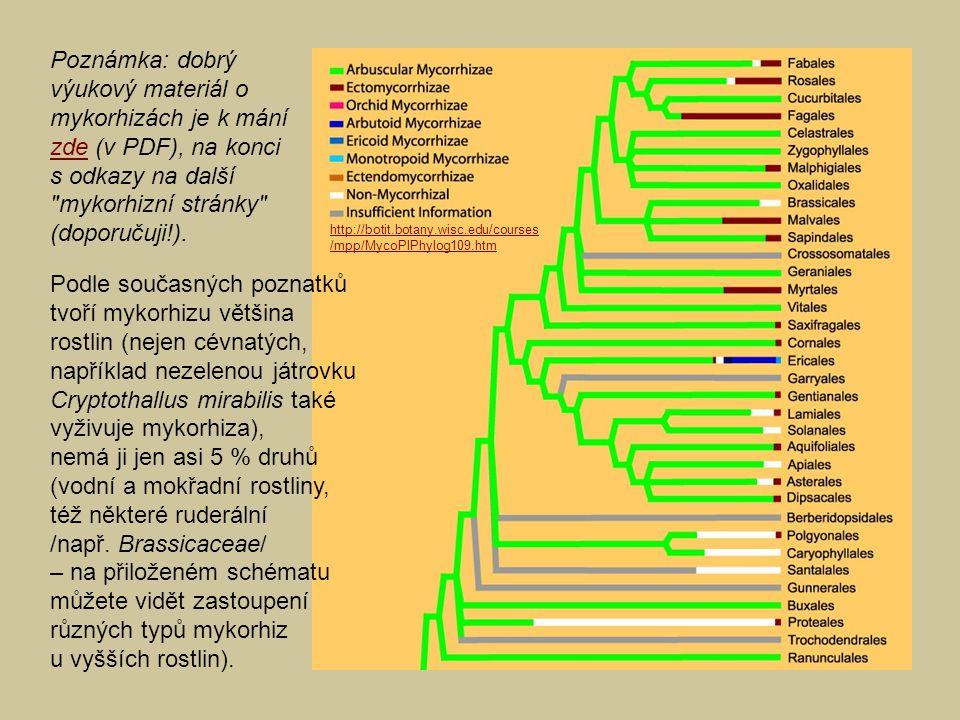 Poznámka: dobrý výukový materiál o mykorhizách je k mání zde (v PDF), na konci s odkazy na další mykorhizní stránky (doporučuji!).