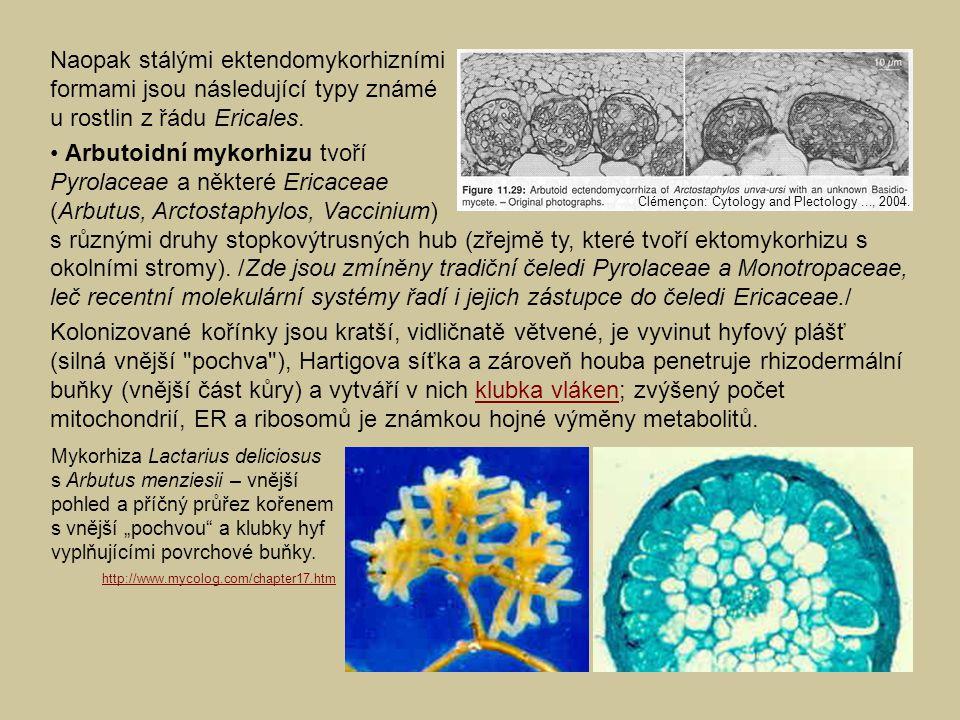 Naopak stálými ektendomykorhizními formami jsou následující typy známé