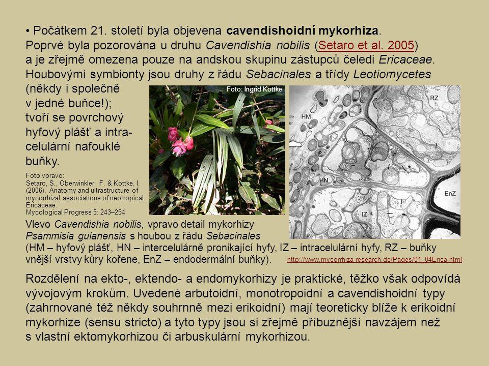 • Počátkem 21. století byla objevena cavendishoidní mykorhiza.