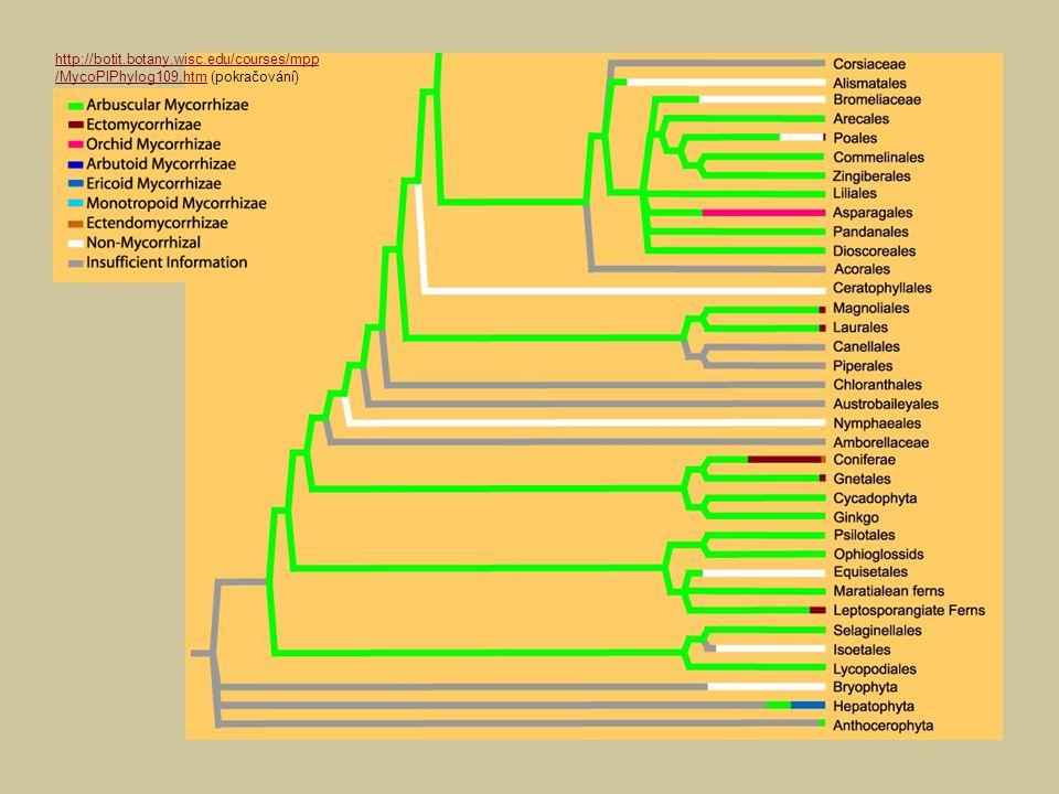 http://botit.botany.wisc.edu/courses/mpp /MycoPlPhylog109.htm (pokračování)