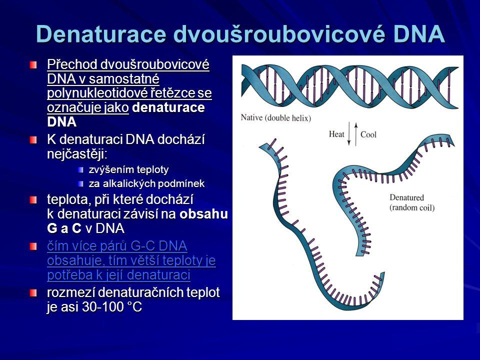 Denaturace dvoušroubovicové DNA