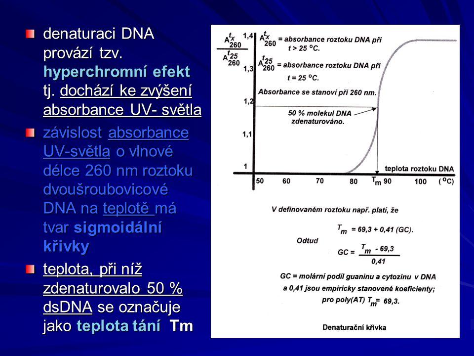denaturaci DNA provází tzv. hyperchromní efekt tj