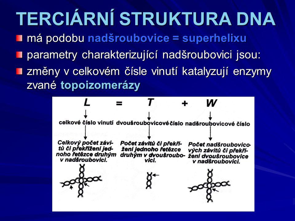 TERCIÁRNÍ STRUKTURA DNA