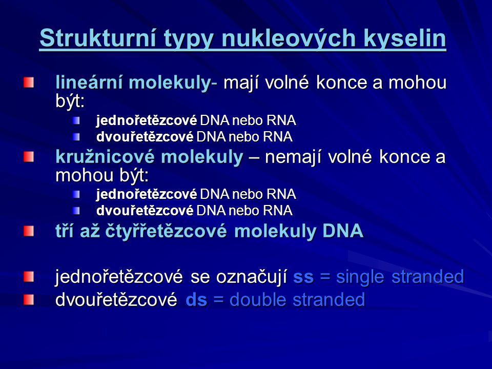 Strukturní typy nukleových kyselin