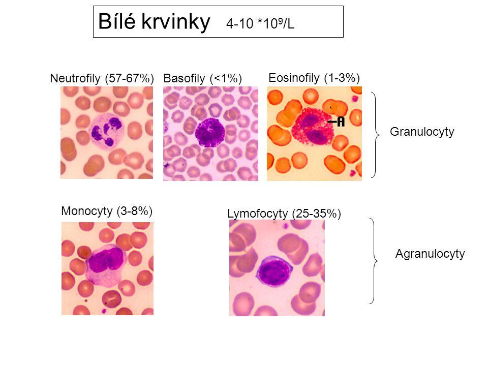 Bílé krvinky 4-10 *109/L Neutrofily (57-67%) Basofily (<1%)