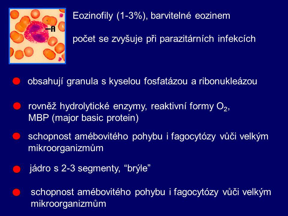 Eozinofily (1-3%), barvitelné eozinem
