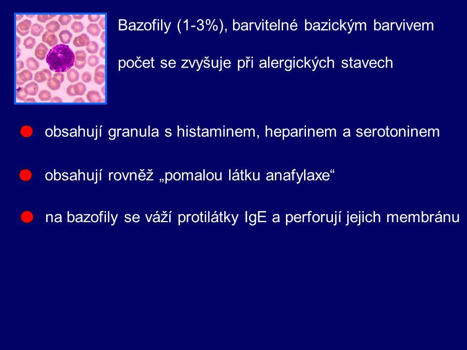 Bazofily (1-3%), barvitelné bazickým barvivem