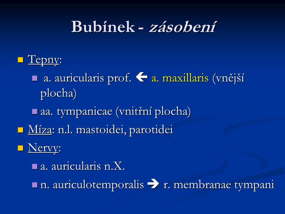 Bubínek - zásobení Tepny: