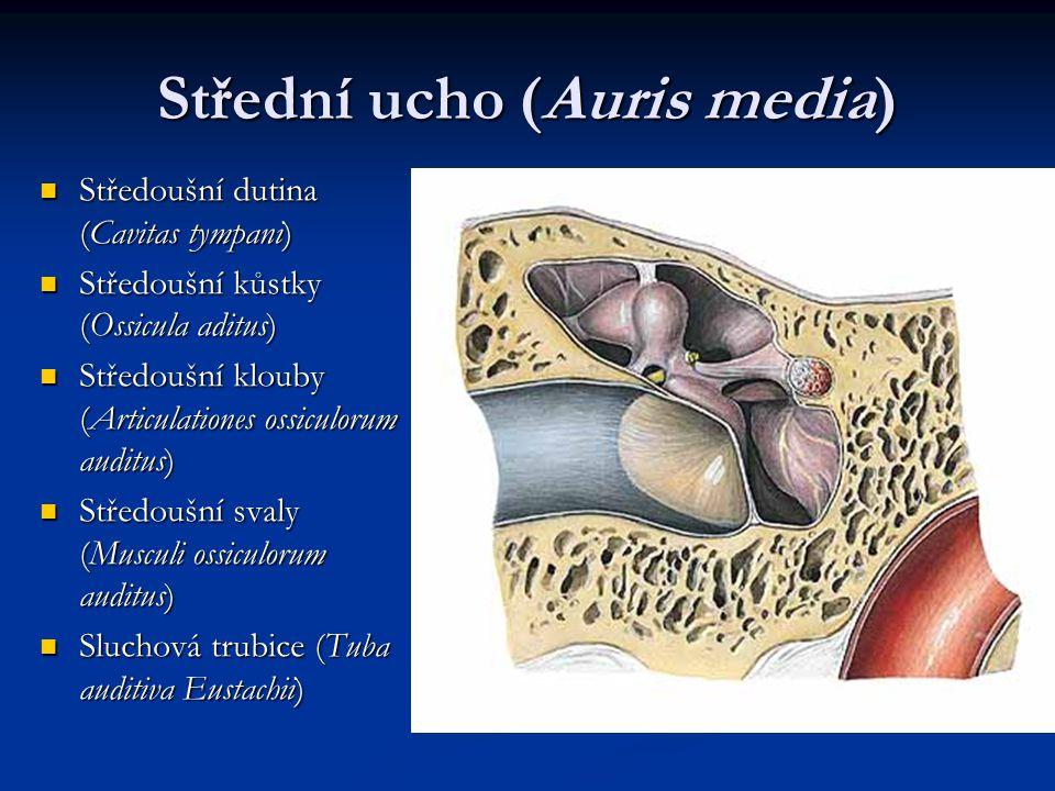 Střední ucho (Auris media)