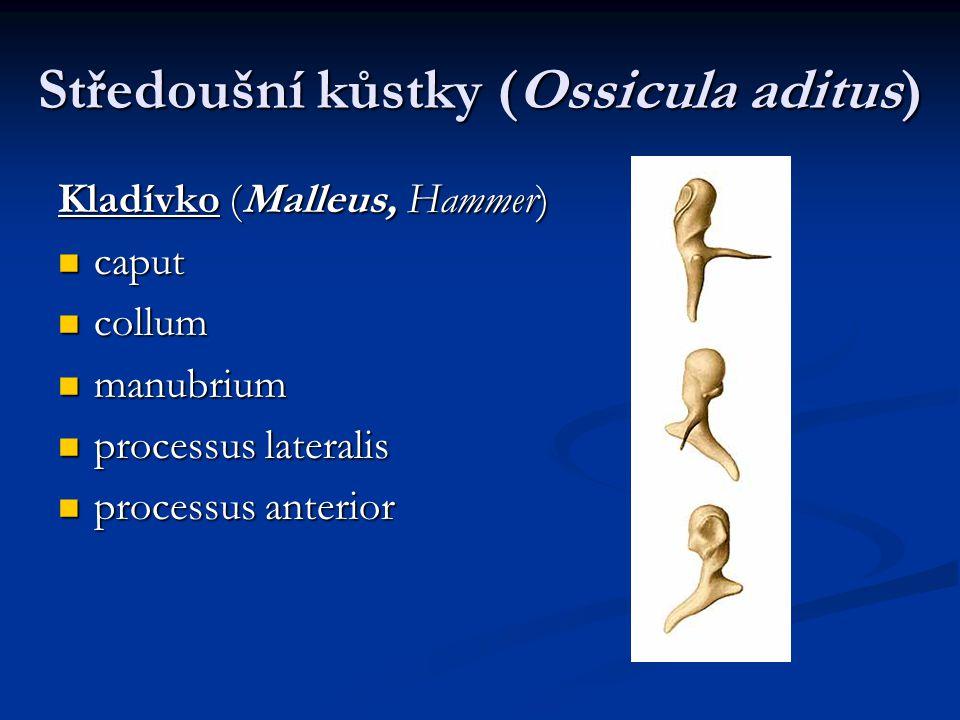 Středoušní kůstky (Ossicula aditus)