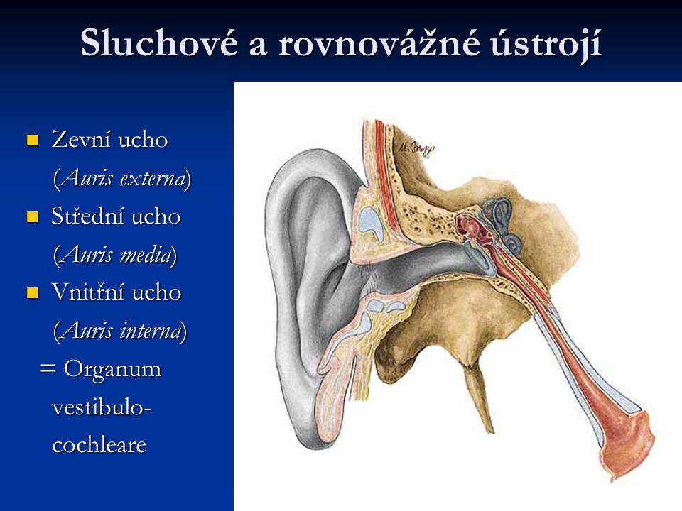 Sluchové a rovnovážné ústrojí