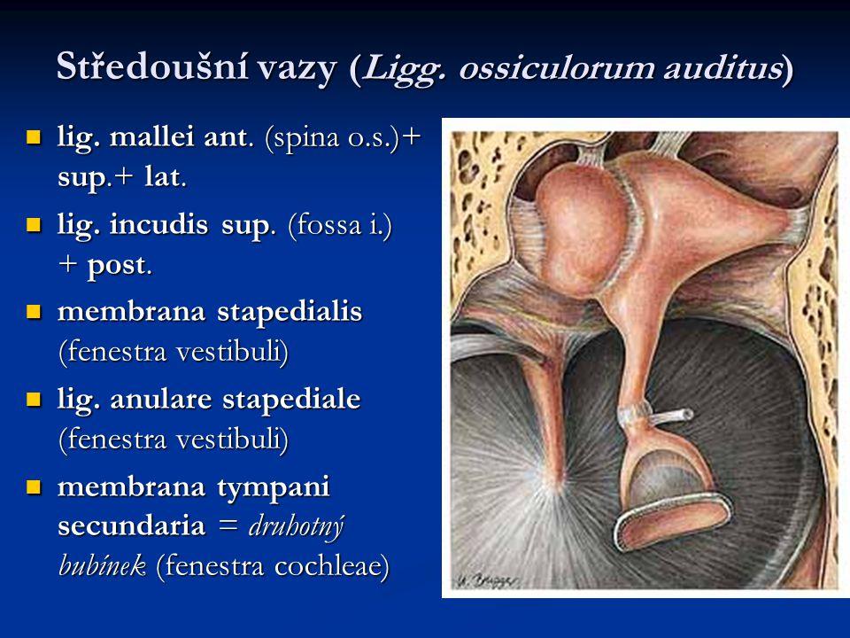 Středoušní vazy (Ligg. ossiculorum auditus)