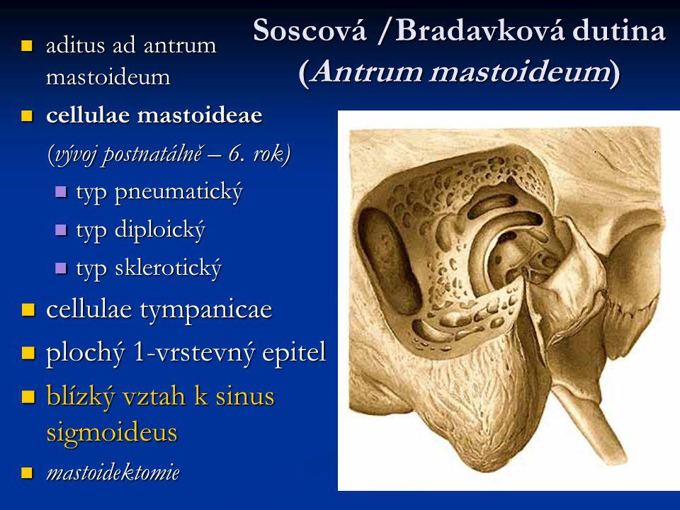 Soscová /Bradavková dutina (Antrum mastoideum)