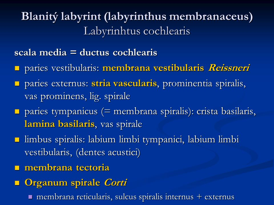 Blanitý labyrint (labyrinthus membranaceus) Labyrinhtus cochlearis