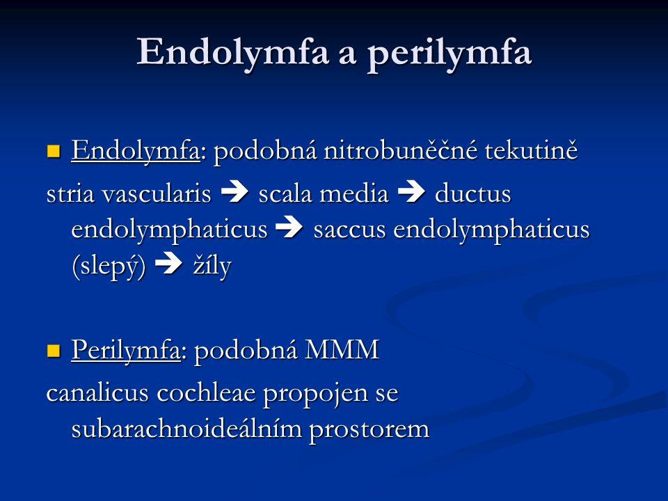 Endolymfa a perilymfa Endolymfa: podobná nitrobuněčné tekutině