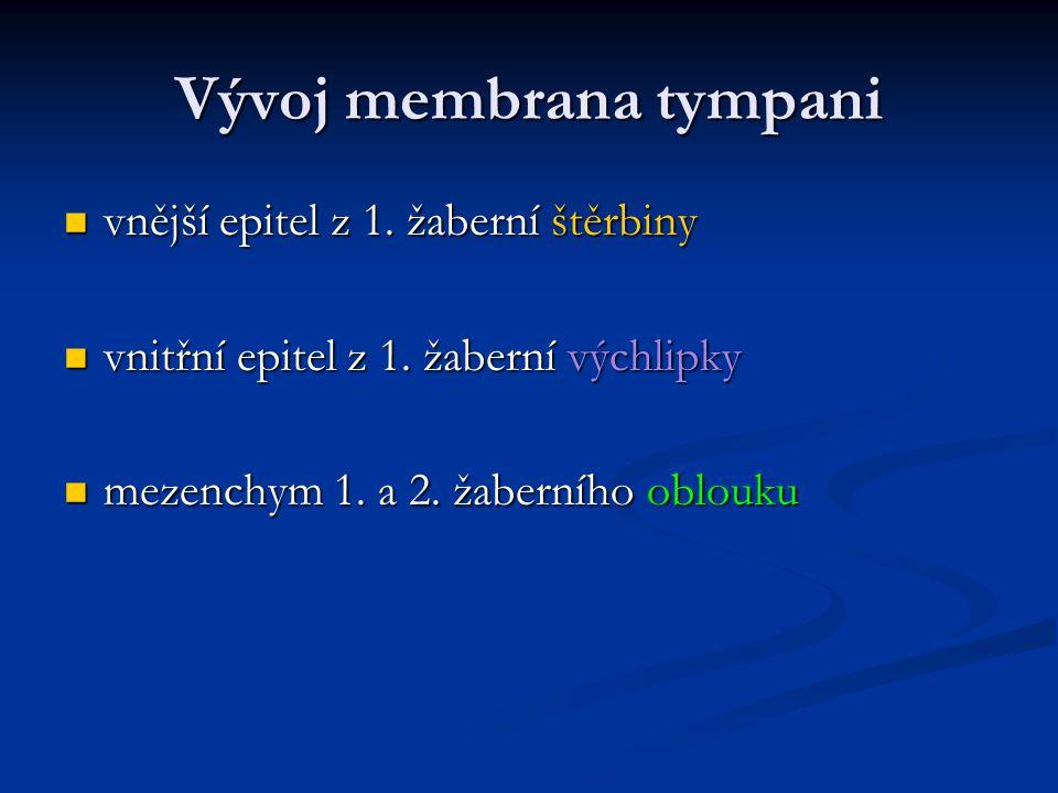 Vývoj membrana tympani