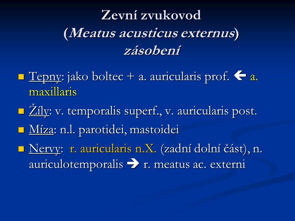 Zevní zvukovod (Meatus acusticus externus) zásobení