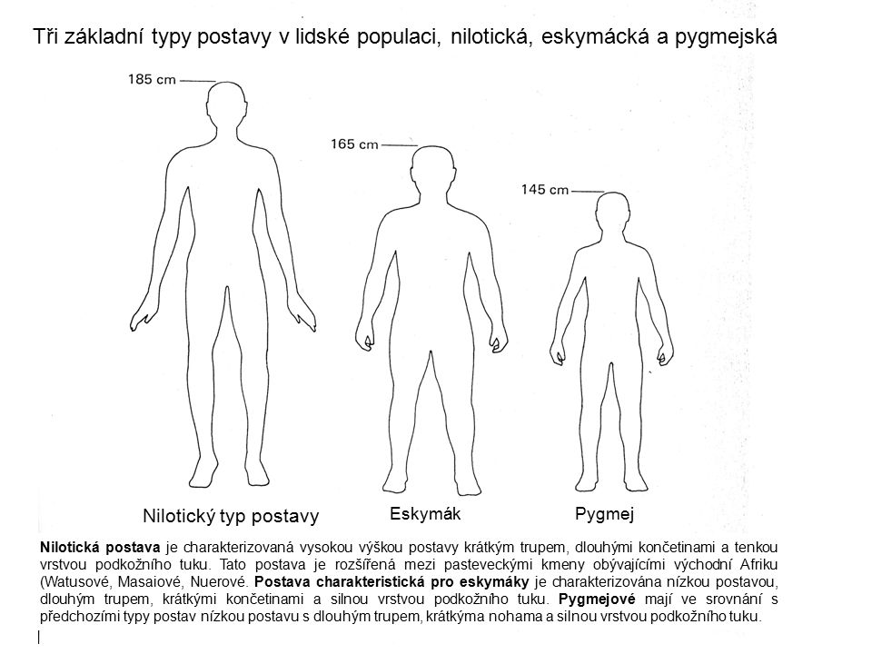Tři základní typy postavy v lidské populaci, nilotická, eskymácká a pygmejská