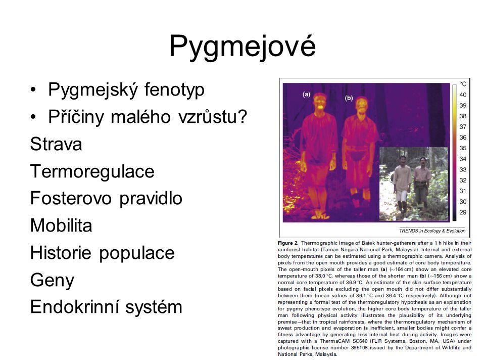 Pygmejové Pygmejský fenotyp Příčiny malého vzrůstu Strava