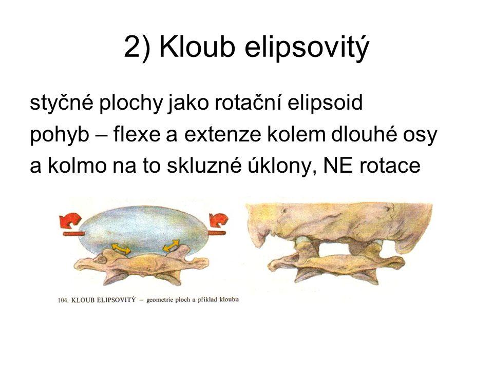 2) Kloub elipsovitý styčné plochy jako rotační elipsoid
