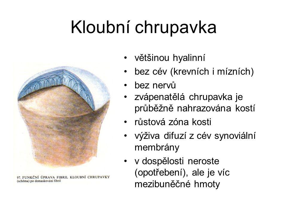 Kloubní chrupavka většinou hyalinní bez cév (krevních i mízních)