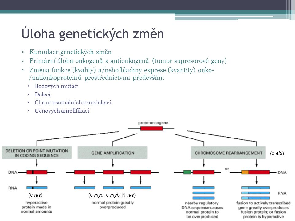 Úloha genetických změn