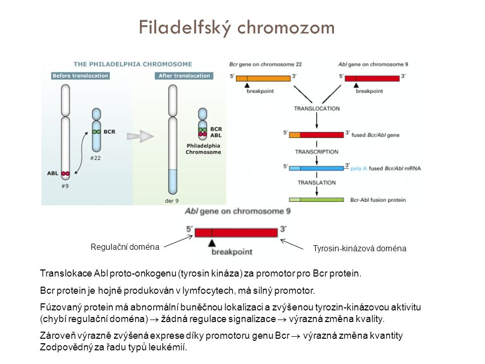 Filadelfský chromozom