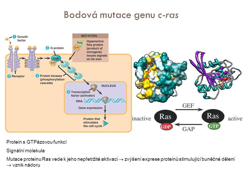 Bodová mutace genu c-ras