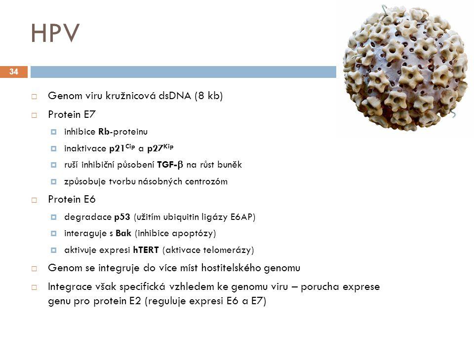 HPV Genom viru kružnicová dsDNA (8 kb) Protein E7 Protein E6