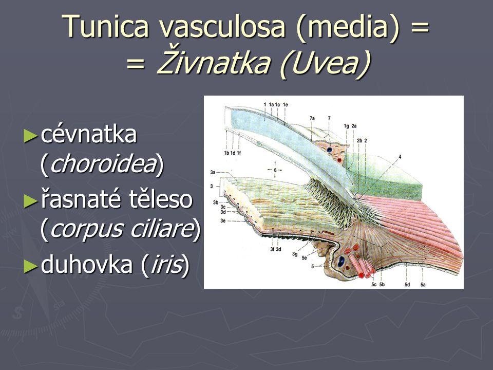 Tunica vasculosa (media) = = Živnatka (Uvea)