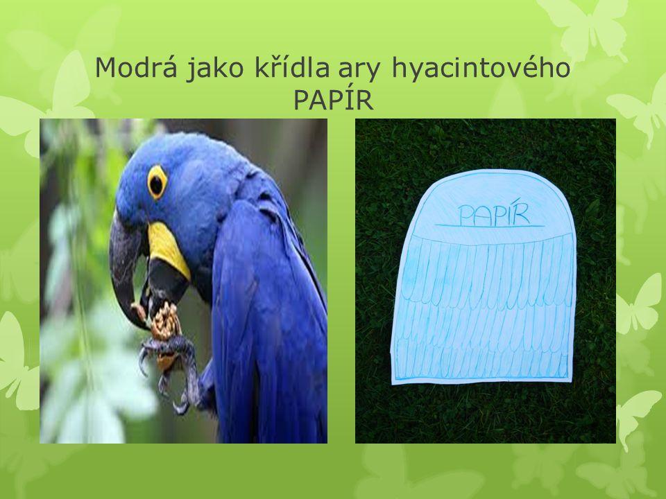 Modrá jako křídla ary hyacintového PAPÍR