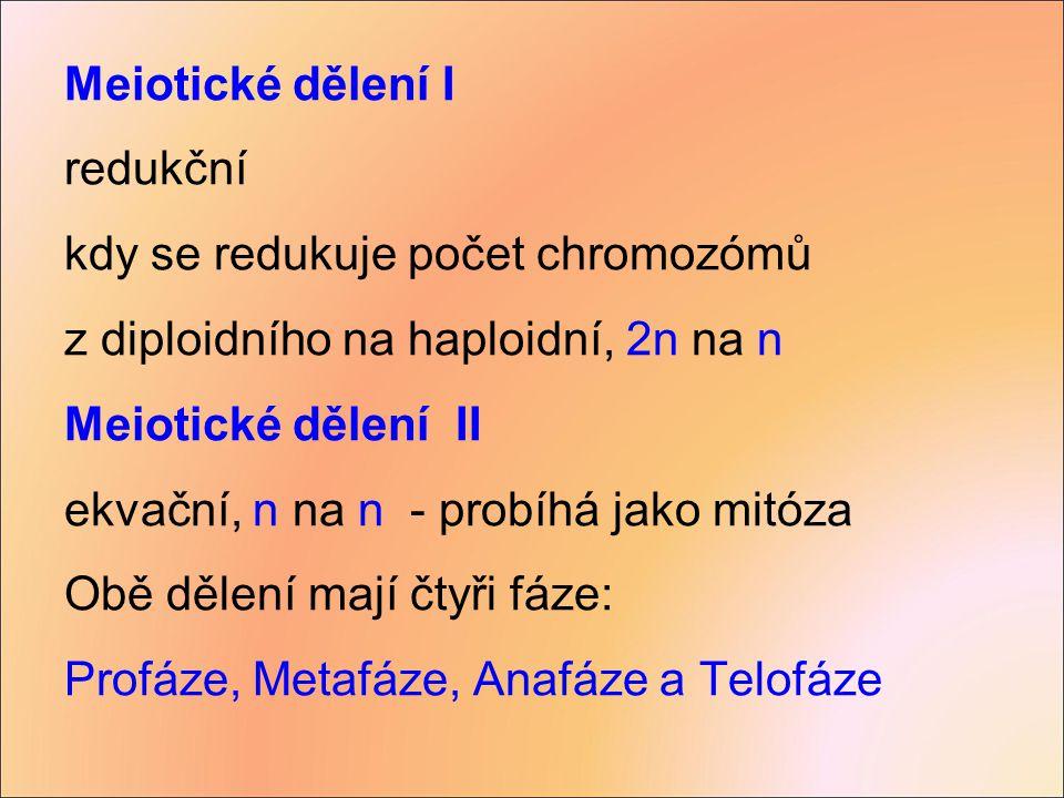 Meiotické dělení I redukční. kdy se redukuje počet chromozómů. z diploidního na haploidní, 2n na n.
