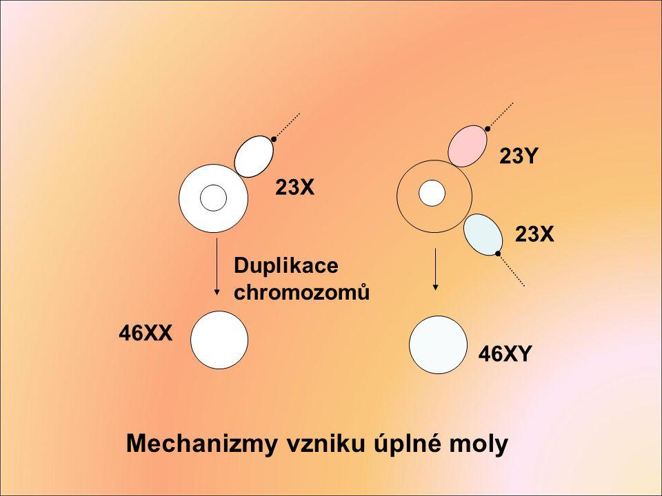 Mechanizmy vzniku úplné moly
