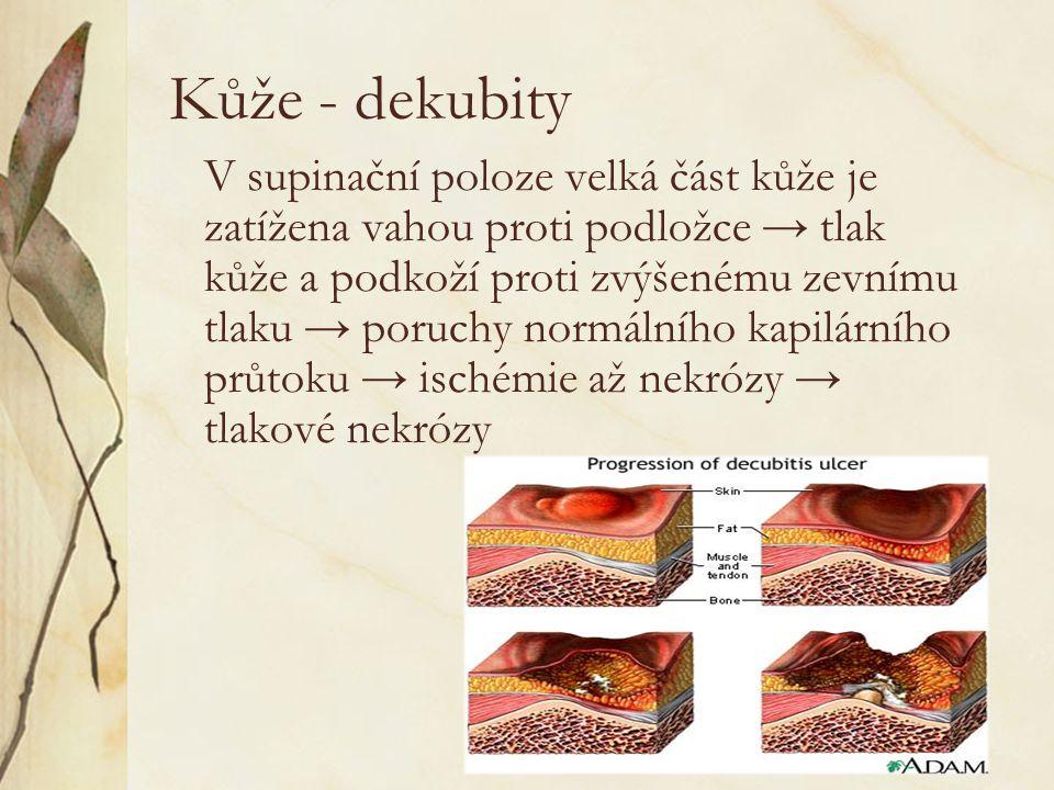Kůže - dekubity