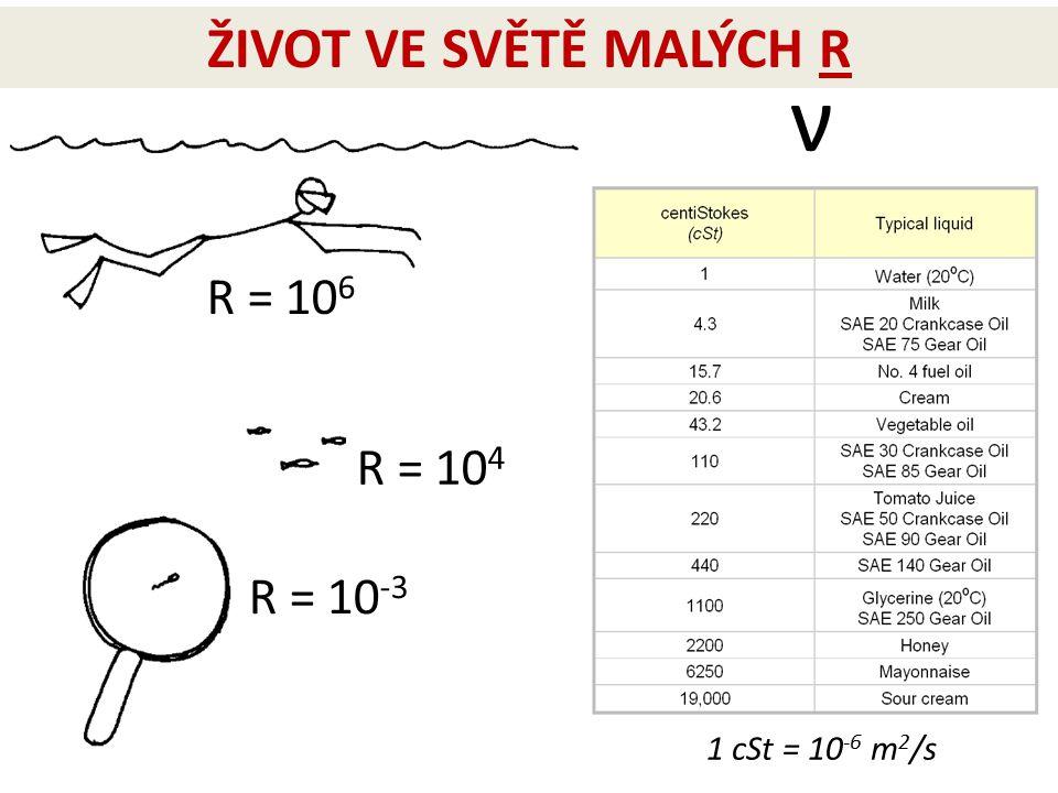 ŽIVOT VE SVĚTĚ MALÝCH R ν R = 106 R = 104 R = 10-3 1 cSt = 10-6 m2/s