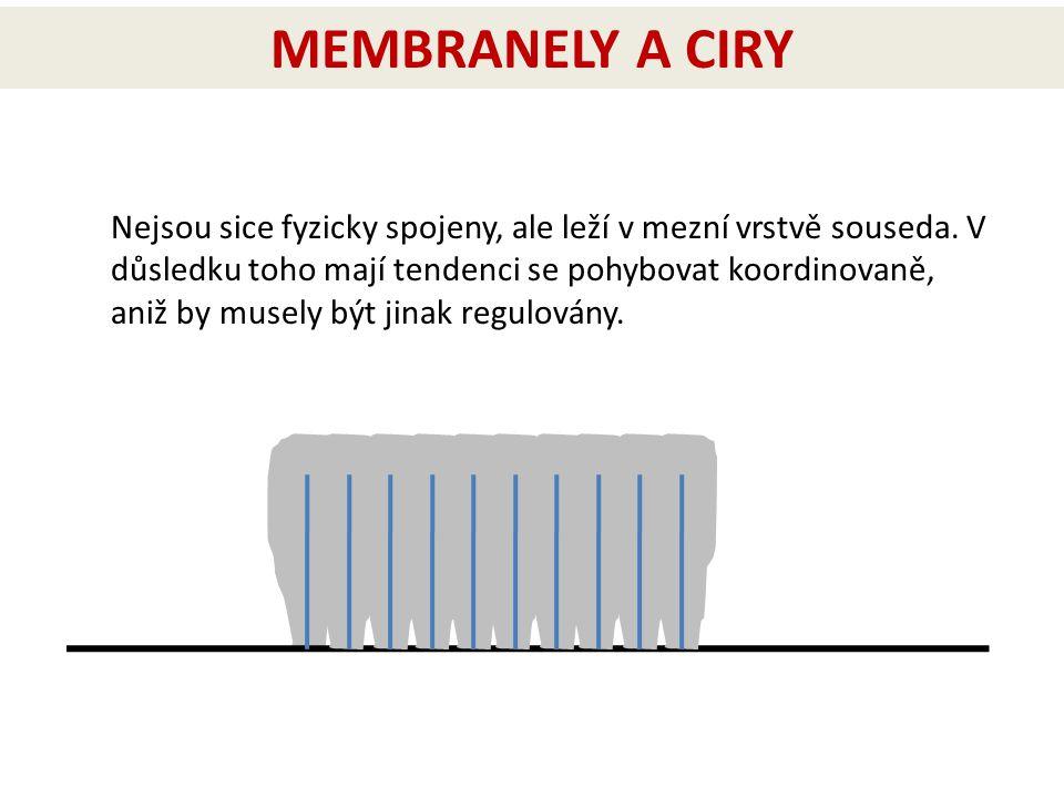 MEMBRANELY A CIRY