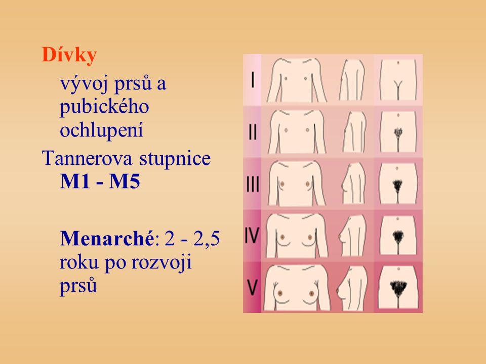 Dívky vývoj prsů a pubického ochlupení. Tannerova stupnice M1 - M5.