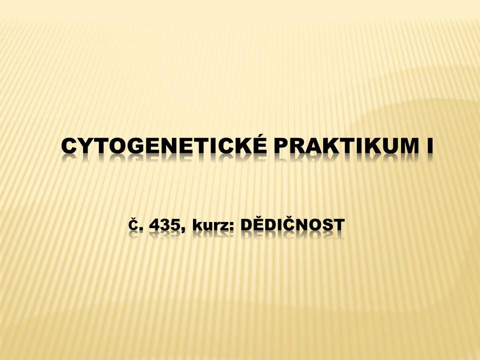 Cytogenetické praktikum I č. 435, kurz: Dědičnost