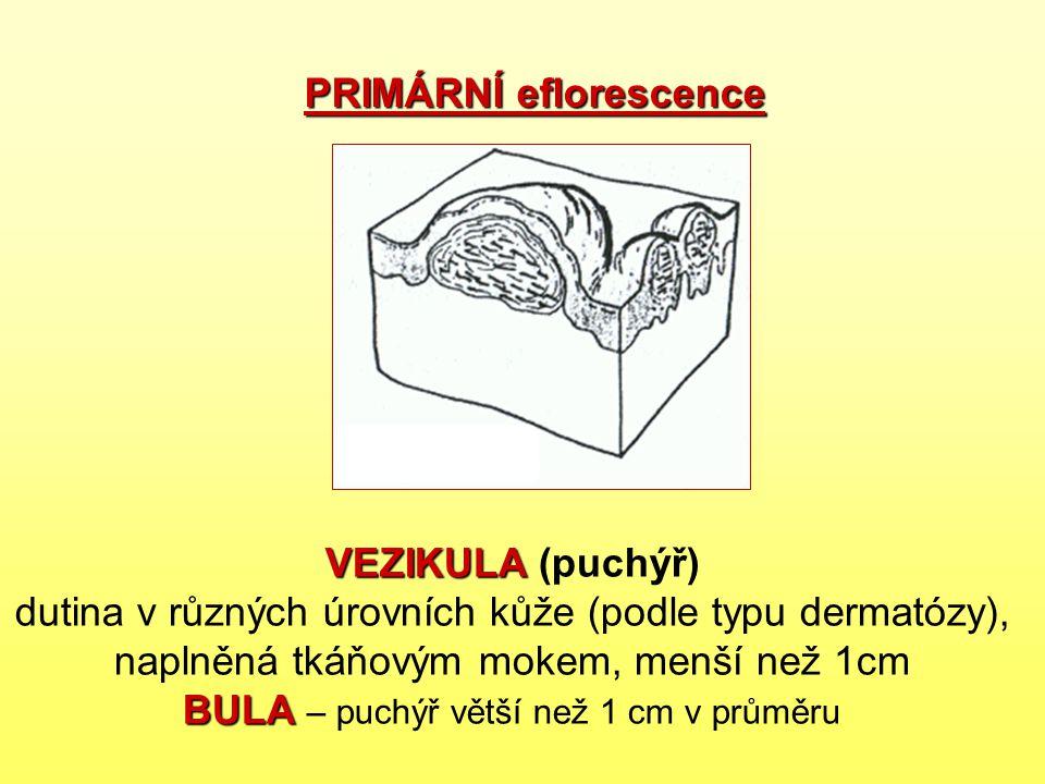 PRIMÁRNÍ eflorescence