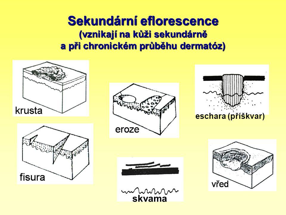 Sekundární eflorescence (vznikají na kůži sekundárně a při chronickém průběhu dermatóz)