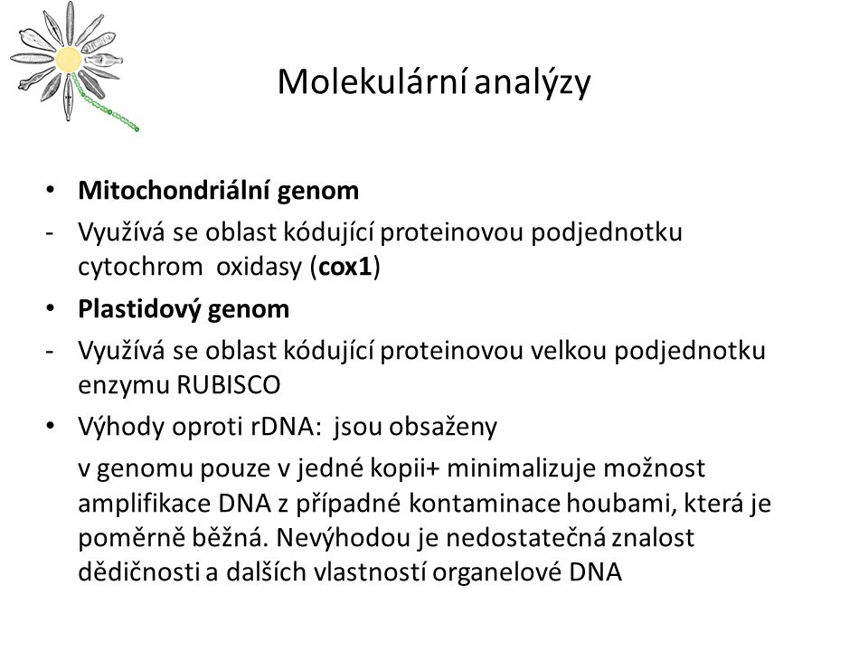 Molekulární analýzy Mitochondriální genom