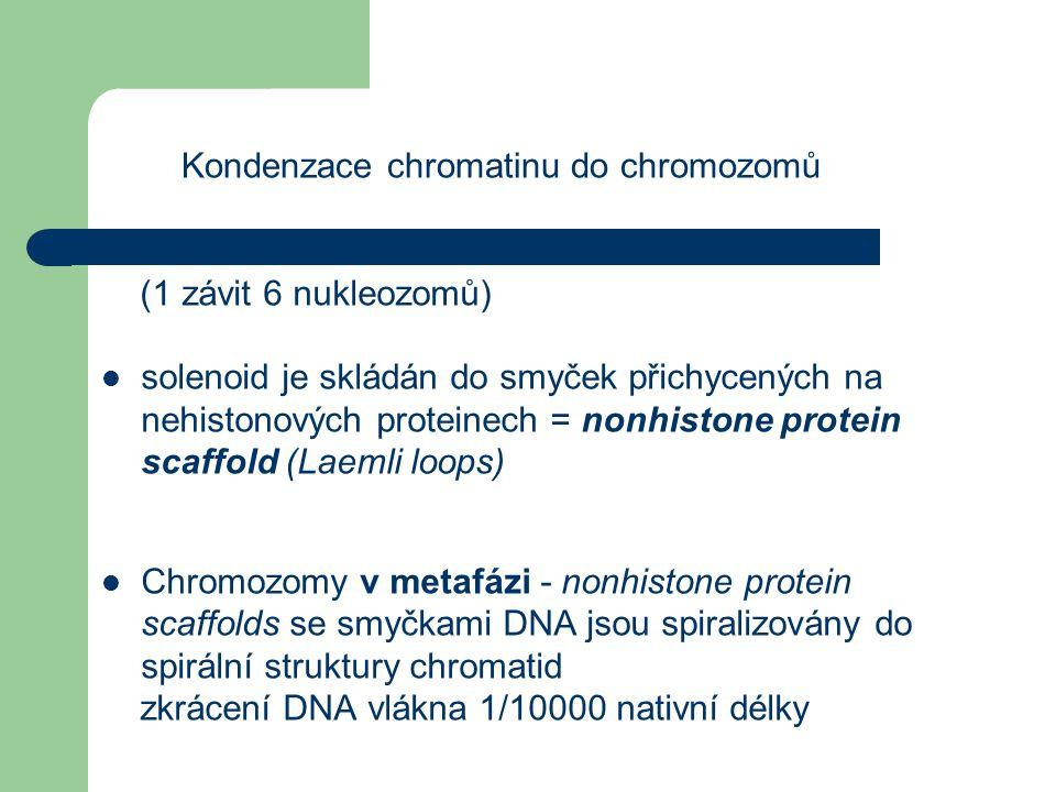 Kondenzace chromatinu do chromozomů