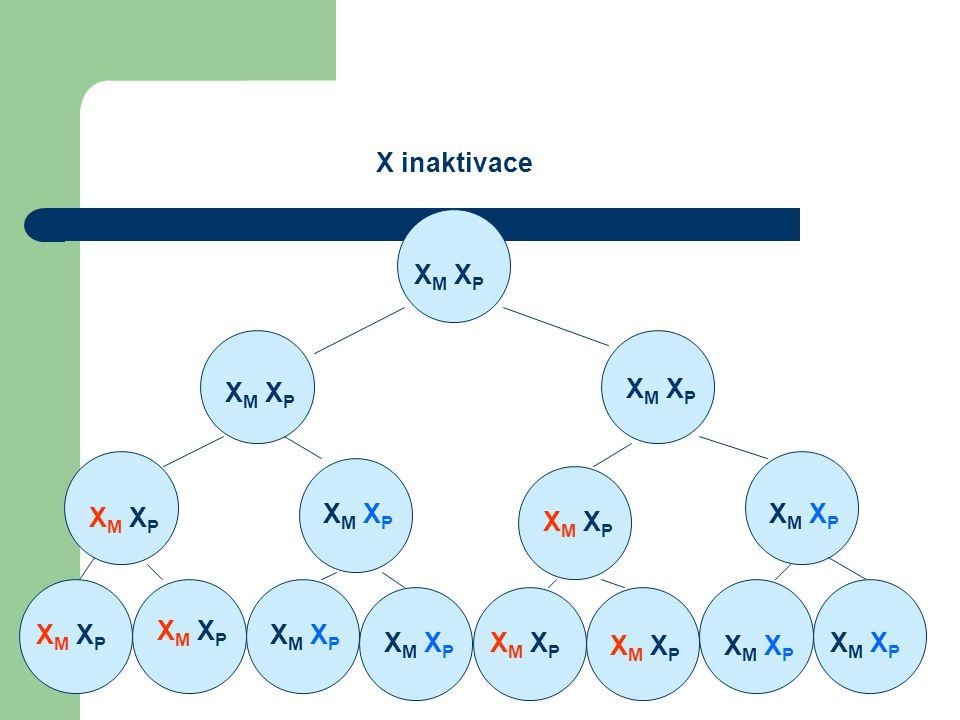 XM XP X inaktivace